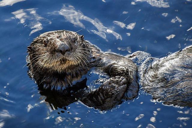 Diferencia entre animales acuáticos y terrestres
