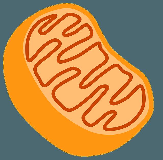Diferencia entre Mitocondrias y Cloroplastos