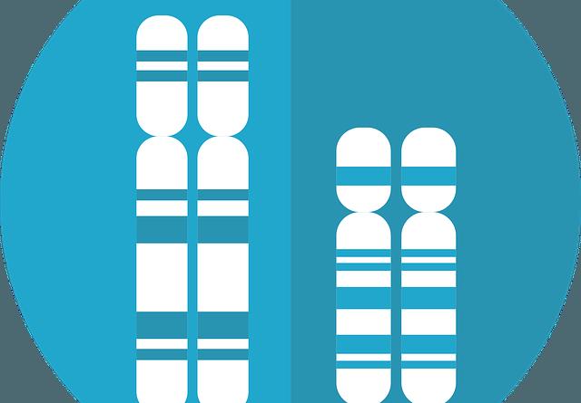 Diferencia entre Cariotipo Humano Masculino y Femenino