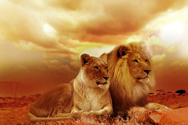 Diferencia entre León y Tigre