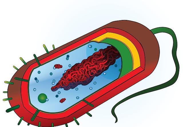 Diferencia entre Membrana y Pared Celular