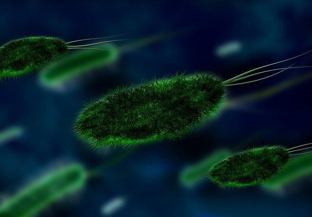 Diferencia entre Exotoxinas y Endotoxinas