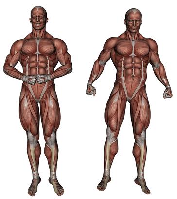 Diferencia entre Catabolismo y Anabolismo