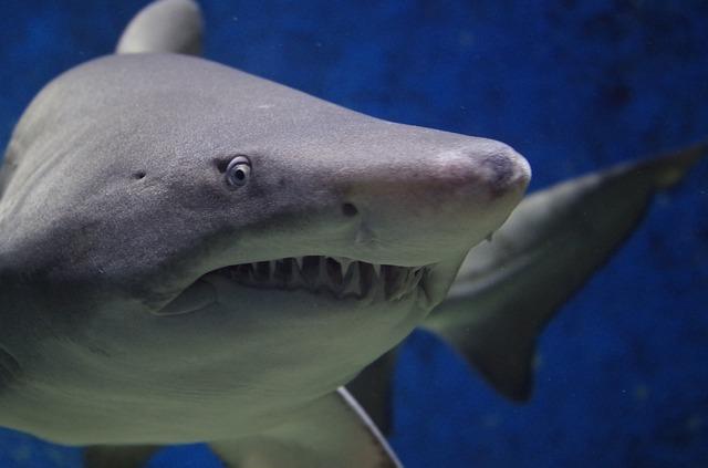 Diferencia entre Megalodón y Tiburón