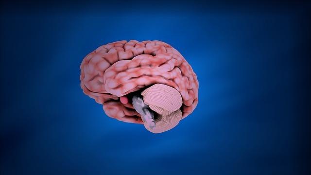 Diferencia entre el Cerebro y el Cerebelo