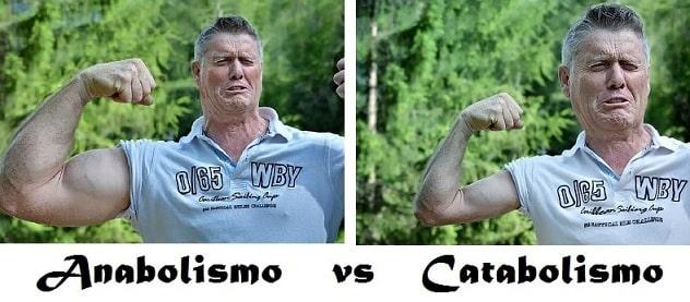 Diferencia entre Metabolismo, Anabolismo y Catabolismo