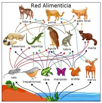 Red alimenticia animal